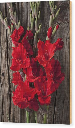 Red Gladiolus Wood Print by Garry Gay