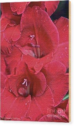 Red Gladiolus Wood Print by Susan Herber