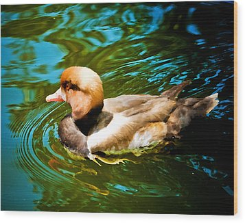 Red Head Duck Wood Print by Mickey Clausen