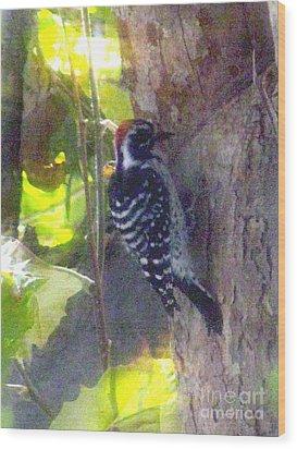 Red Headed Woodpecker Wood Print by Bonnie Muir