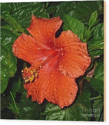 Wood Print featuring the photograph Red Hibiscus After The Rain by Renee Trenholm