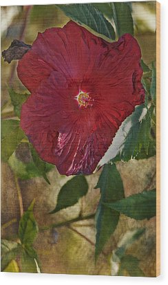 Red Hibiscus Wood Print by Bonnie Bruno