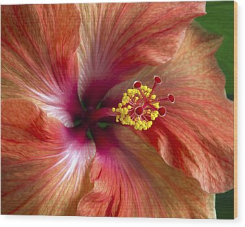 Red Hibiscus Wood Print by Catherine Booth-Smith