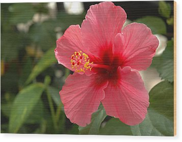 Red Hibiscus Wood Print by Jerry McElroy