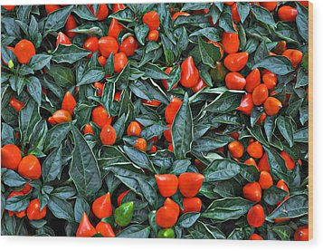 Red Hots Wood Print by Mary Machare