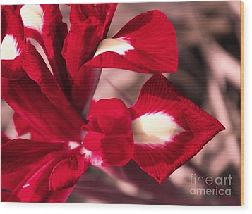 Wood Print featuring the photograph Red Iris by AmaS Art