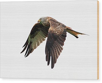 Red Kite In Flight Wood Print by Grant Glendinning Photography