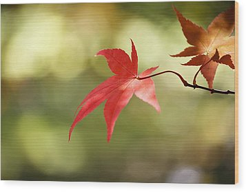 Wood Print featuring the photograph Red Leaf. by Clare Bambers