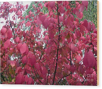 Red Leaves I Wood Print by Alys Caviness-Gober