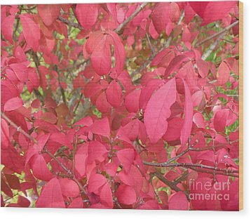 Red Leaves IIi Wood Print by Alys Caviness-Gober