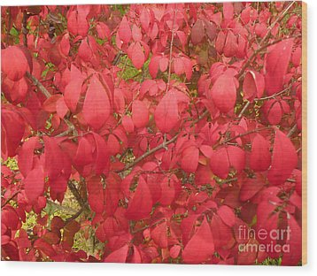 Red Leaves Iv Wood Print by Alys Caviness-Gober