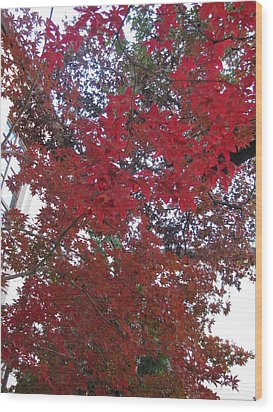 Red Leaves Of Windsor Wood Print by Shawn Hughes