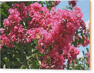 Wood Print featuring the photograph Red Lilac Bush by Michael Waters