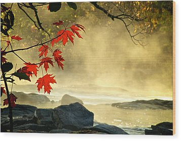 Red Maple Leafs In Fog Wood Print