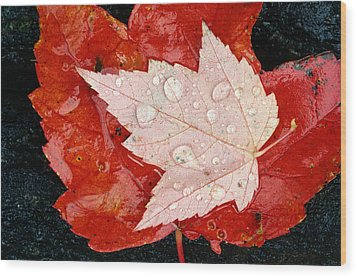 Red Maple Leaves Wood Print by Mike Grandmailson