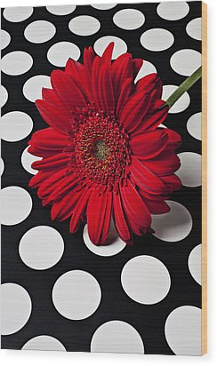 Red Mum With White Spots Wood Print by Garry Gay