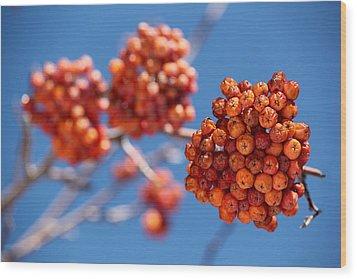 Red Orange Blue Wood Print