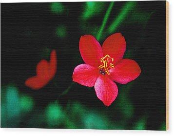 Red Petaled Dream Wood Print