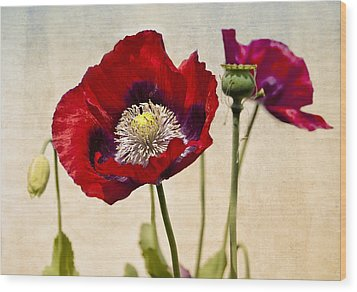 Red Poppies Wood Print by Marion McCristall