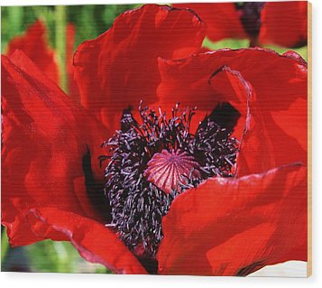 Red Poppy Close Up Wood Print by Bruce Bley