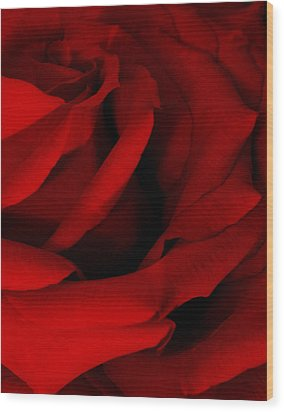 Red Red Rose Wood Print by Karen Harrison