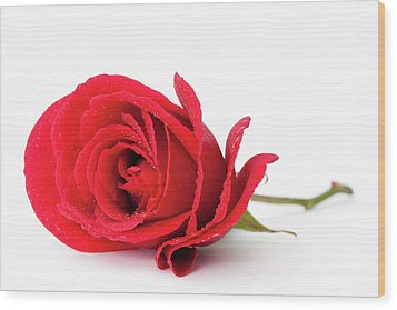 Red Rose Wood Print by Andrew Dernie