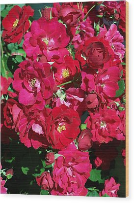 Red Rose Bush Wood Print