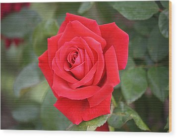 Wood Print featuring the photograph Red Rose by Donna  Smith