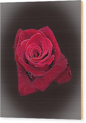 Red Rose II Wood Print by Jim Ziemer