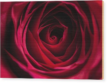 Wood Print featuring the photograph Red Rose by Matt Malloy