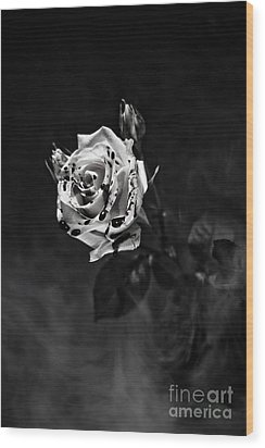 Red Rose Wood Print by Randall  Cogle