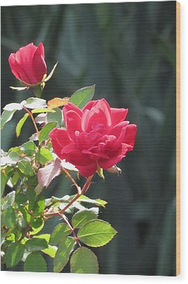 Red Rose Wood Print by Rebecca Overton