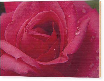 Wood Print featuring the photograph Red Rose With Rain Tears by Darleen Stry
