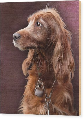 Wood Print featuring the photograph Red Setter Dog Portrait by Ethiriel  Photography