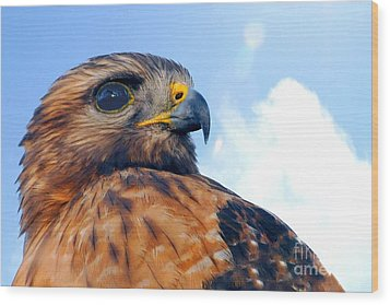 Wood Print featuring the photograph Red Shouldered Hawk Portrait by Dan Friend