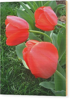 Red Spring Tulips Wood Print