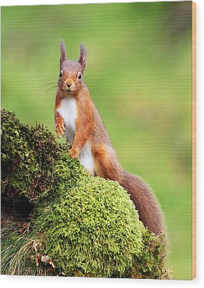 Red Squirrel Wood Print by Grant Glendinning