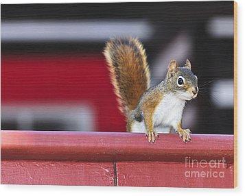 Red Squirrel On Railing Wood Print by Elena Elisseeva