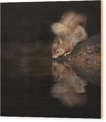 Red Squirrel Reflection Wood Print