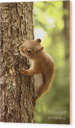 Red Squirrel Wood Print by Ted Kinsman