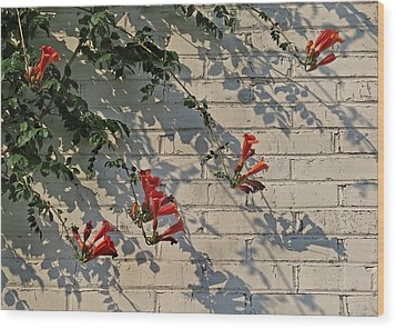 Wood Print featuring the photograph Red Summer Trumpets by Deborah Smith