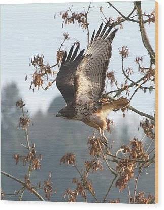 Red-tail Hawk Wood Print by Angie Vogel