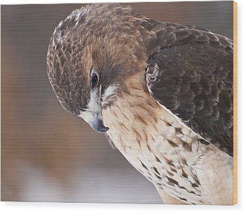 Red Tail Hawk Wood Print by Cindy Lindow