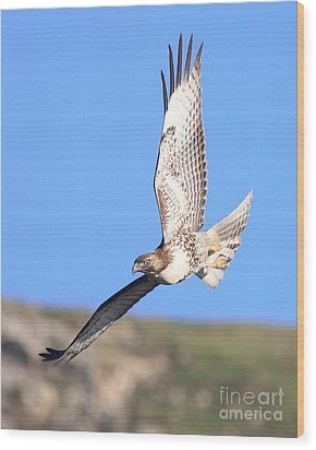Red-tailed Hawk . 40d10968 Wood Print by Wingsdomain Art and Photography