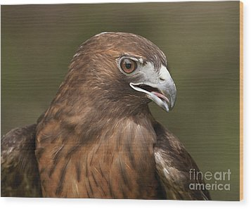 Wood Print featuring the photograph Red-tailed Hawk by Doug Herr