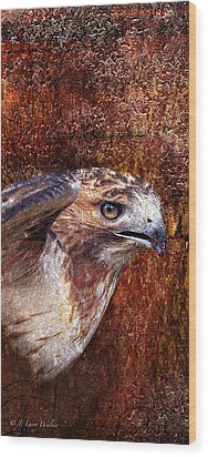 Red-tailed Hawk Wood Print by J Larry Walker