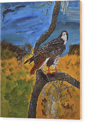 Red-tailed Hawk Perch In Tree Wood Print