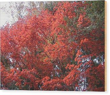 Red Tree Wood Print by Naxart Studio