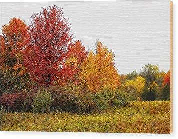 Red Tree Wood Print by Scott Hovind