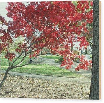 Red Tree Wood Print by Todd Sherlock